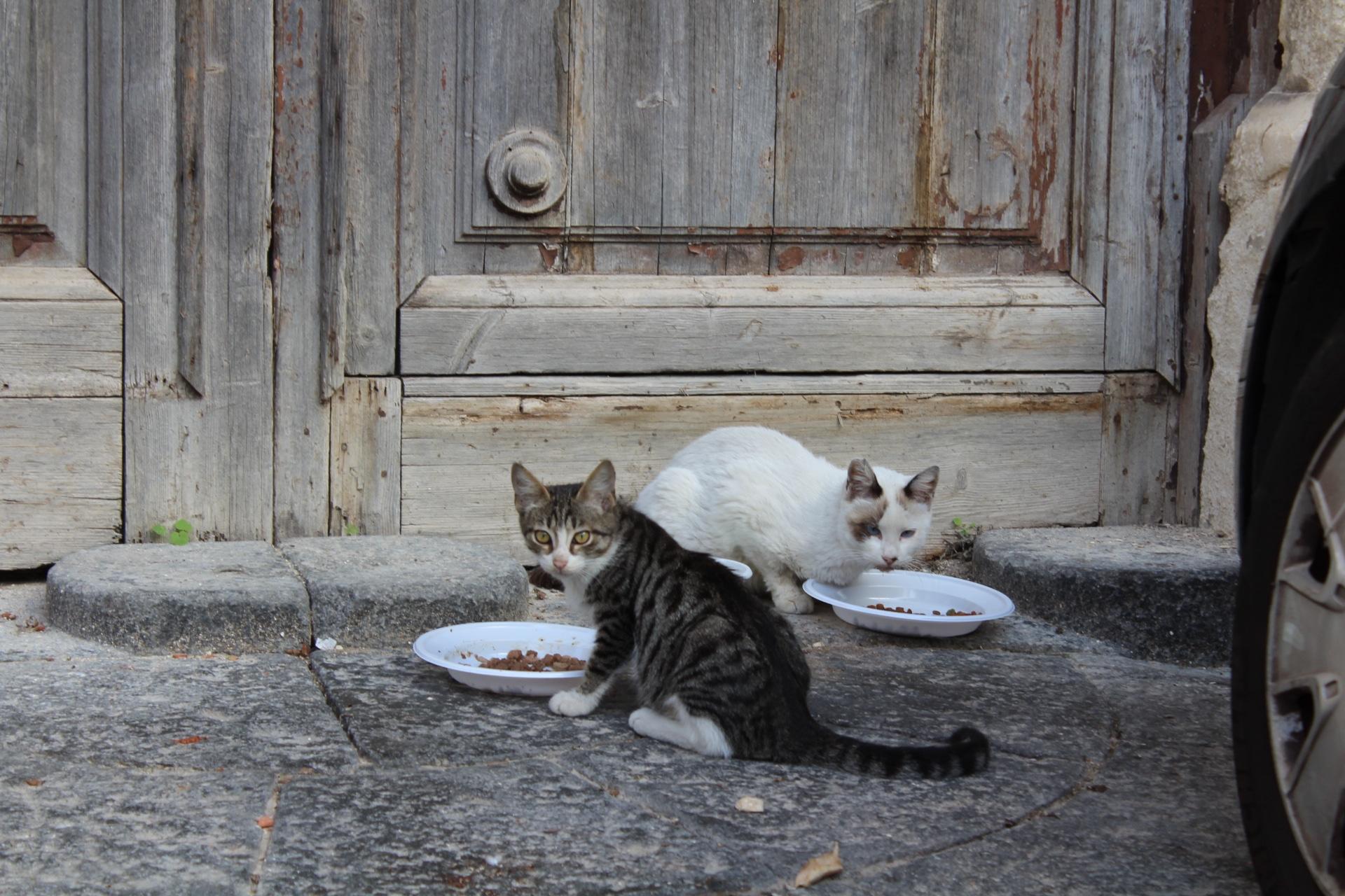Auf der Straße lebende Katzen
