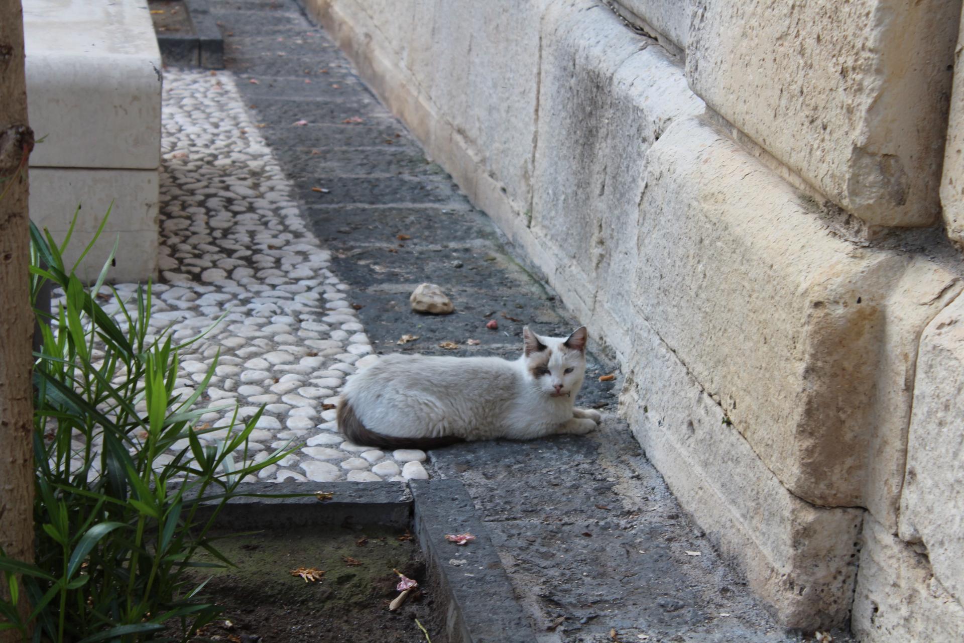 Streunerkatze an einem historischen Platz in Ortigia