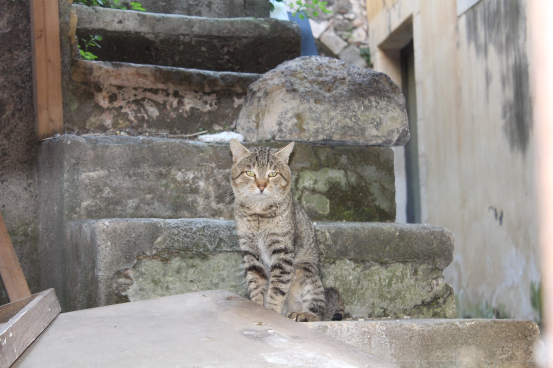 Ein Streuner, der in Ortigias (Syrakus) Ruinen lebt