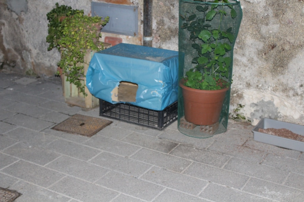 Cat house and litterbox for feral cats. Seen at a cat colony in Syracuse.