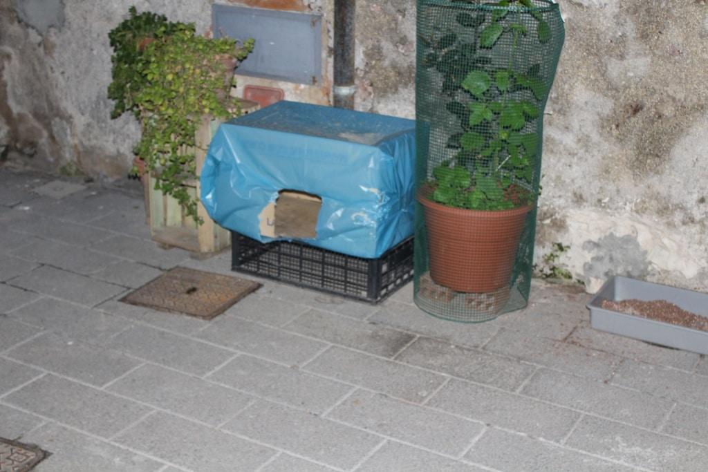 Katzenhäuschen und Katzentoilette für Straßenkatzen. Gesehen bei einer Kolonie, die von einer Anwohnerin in Syrakus versorgt wird.