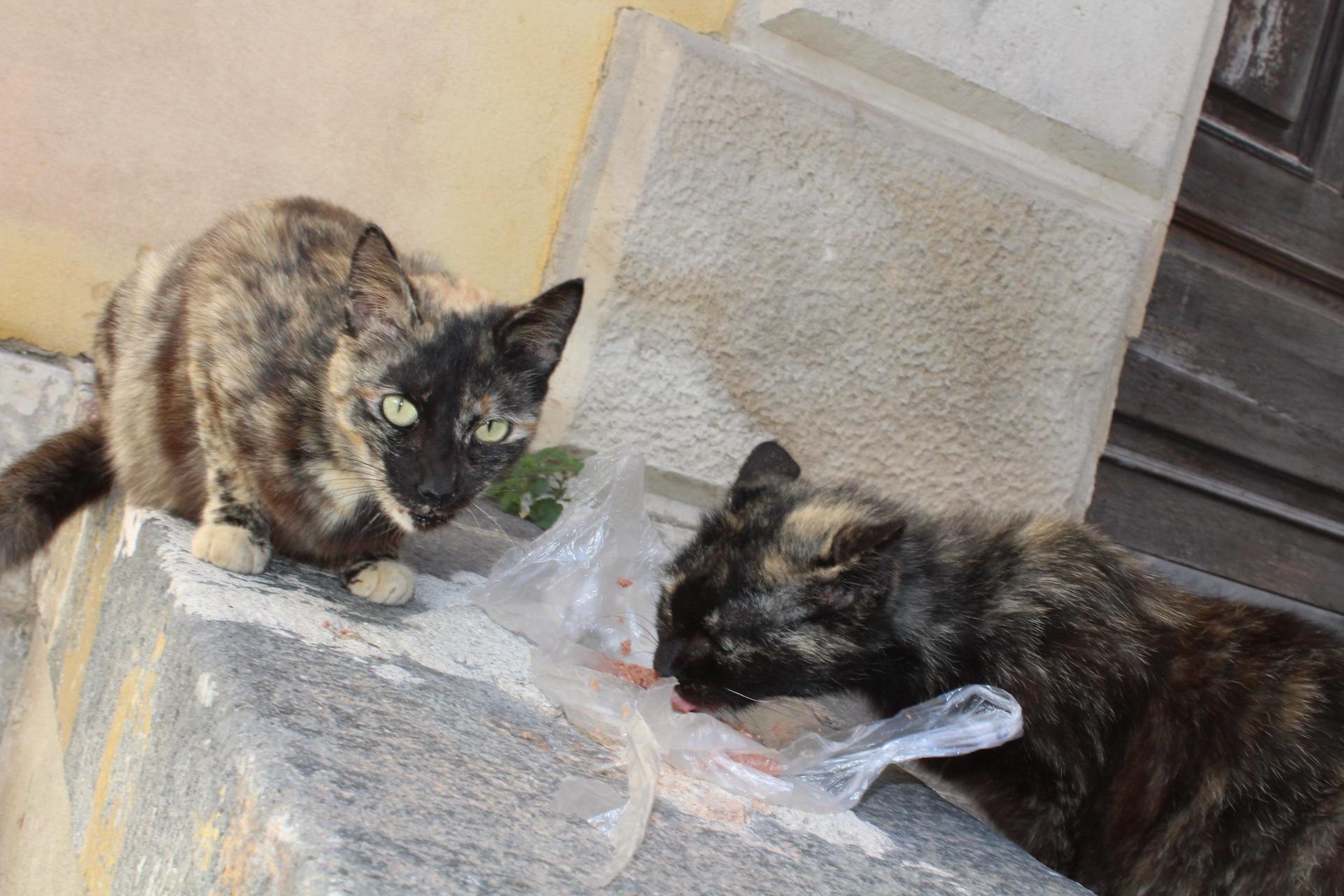 Gatti di Colonia a Siracusa