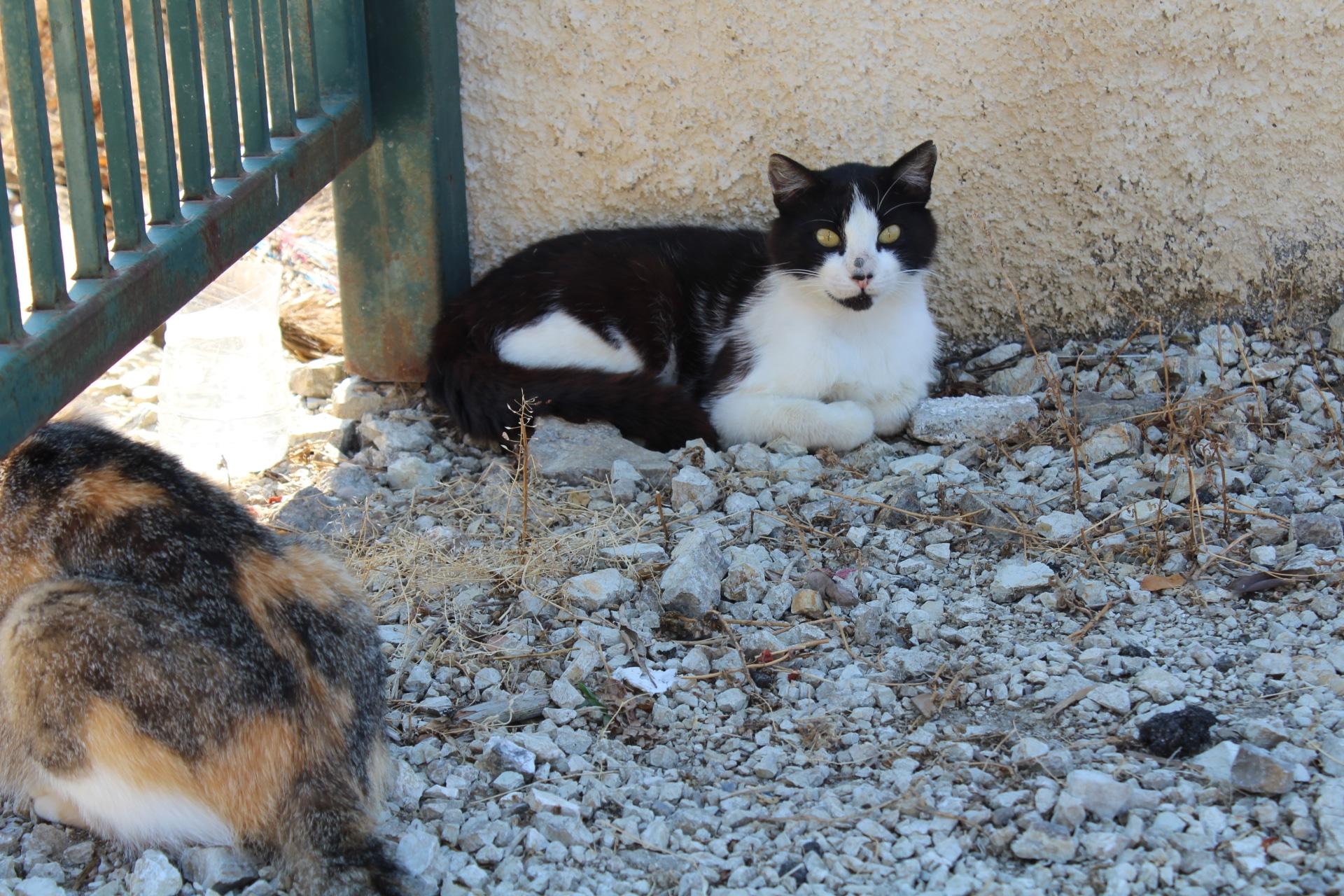 Gatti di strada che vivono accanto a un bidone della spazzatura