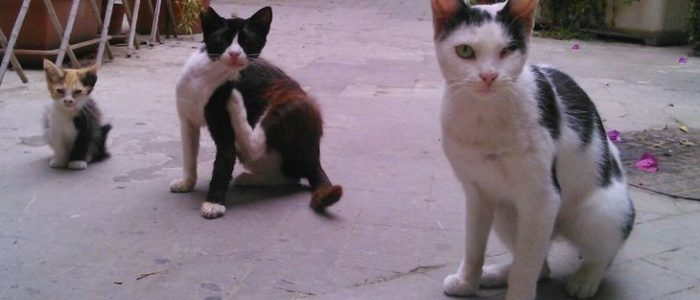 Neutering campaign for Sicilian street cats