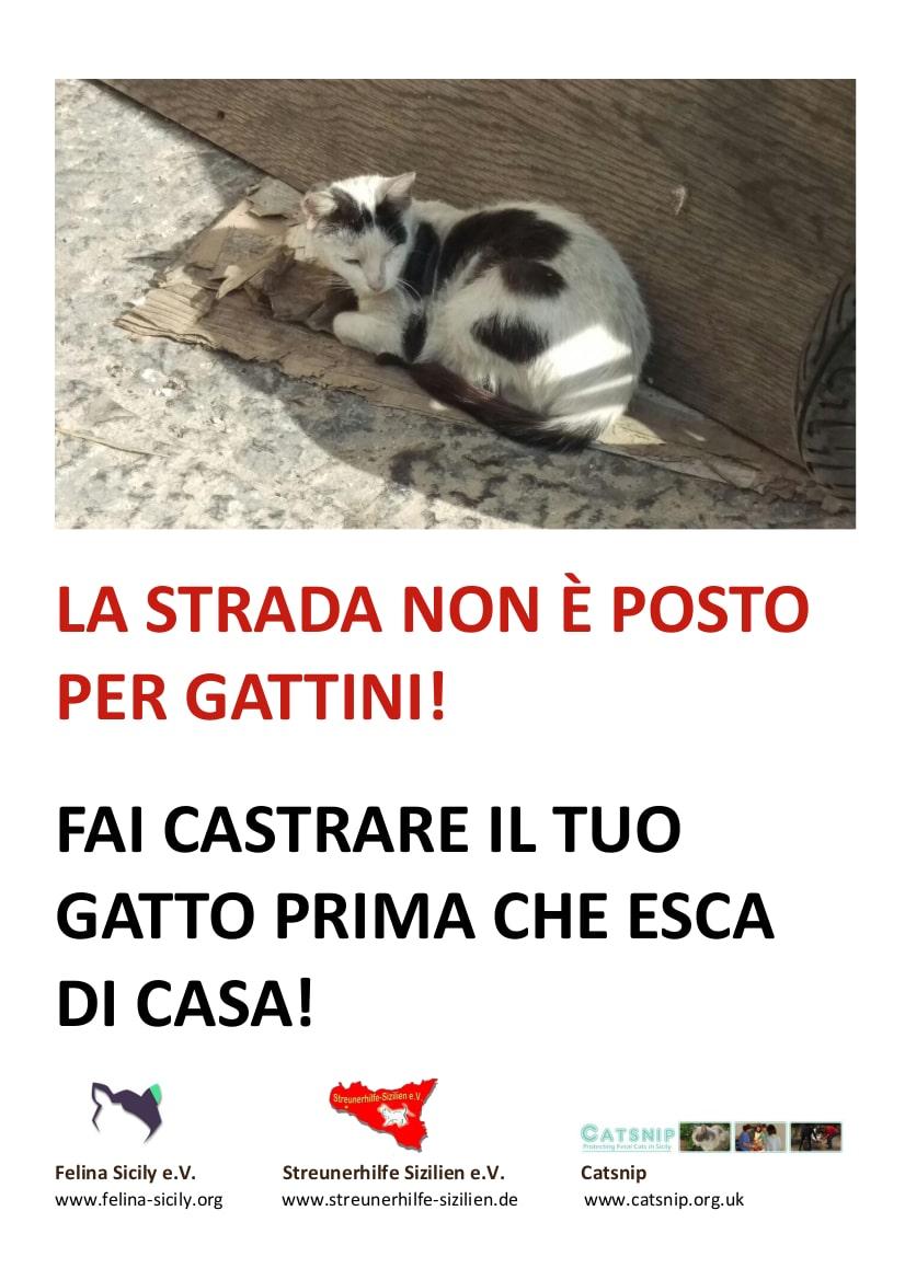 Felina Sicily Flyer1