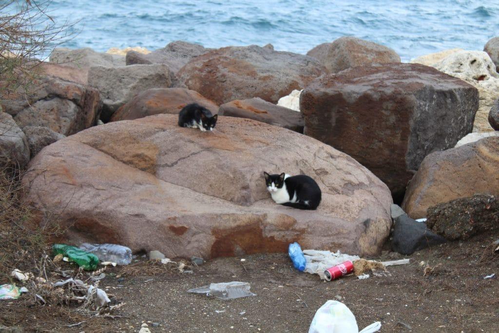 Katzenfamilie am Strand