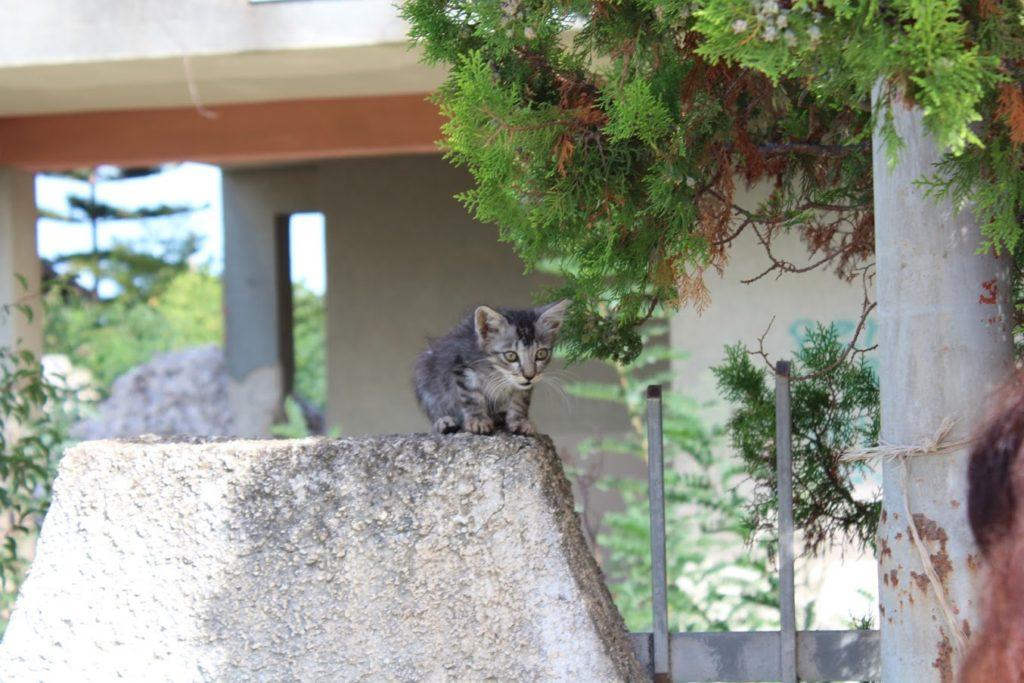 Katzenbaby in Syrakus