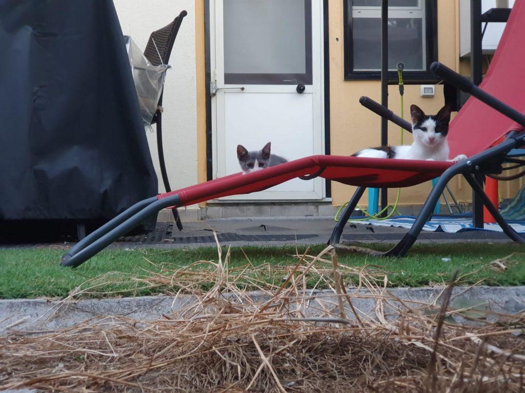 Mutter mit Kitten