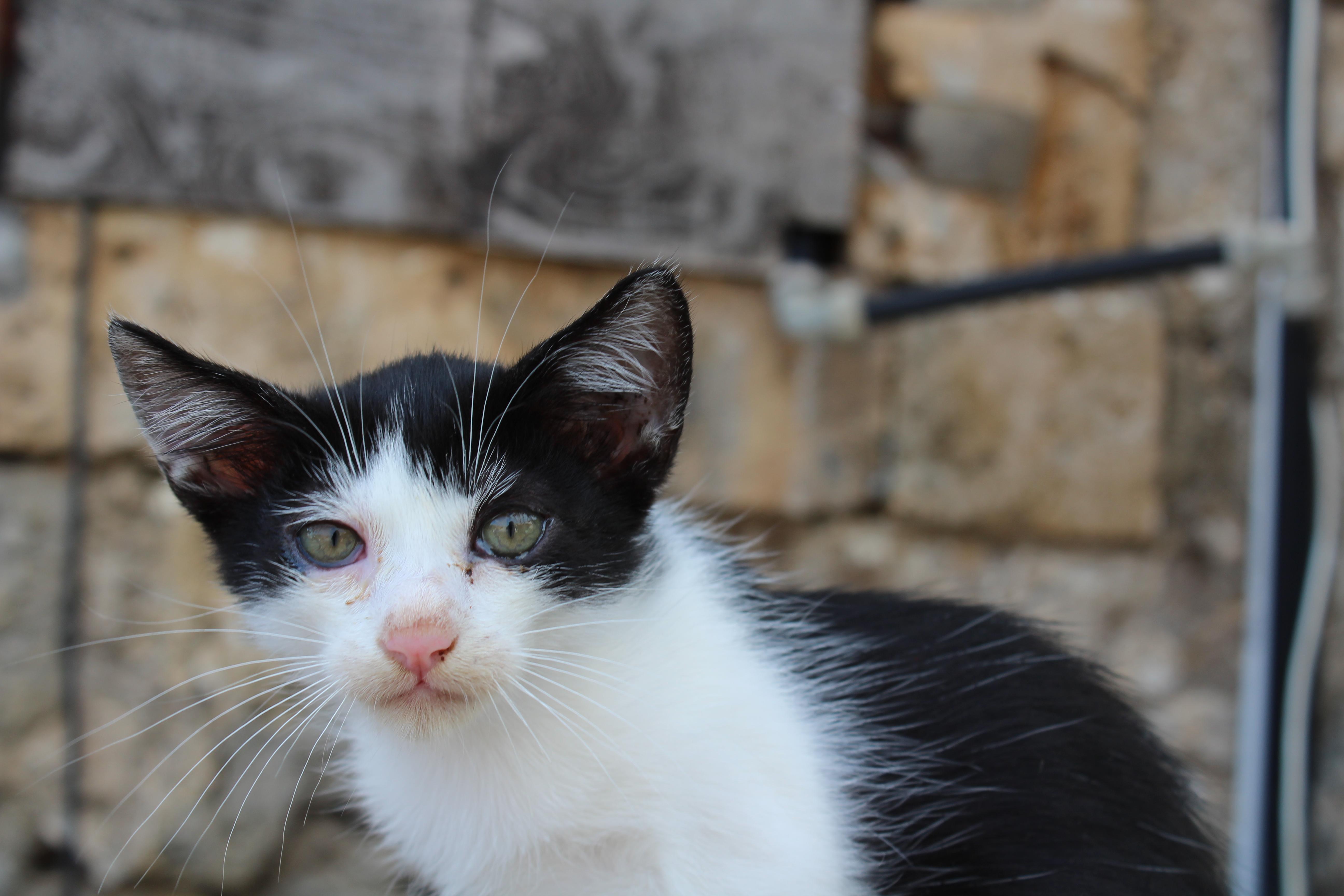 Ein Kitten in Sizilien, das auf der Straße lebt.